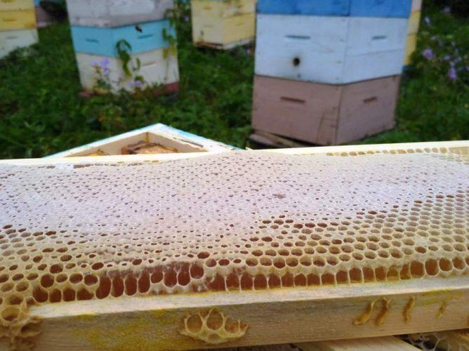 Чарышский мёд