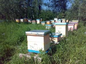 Мёд с пасеки