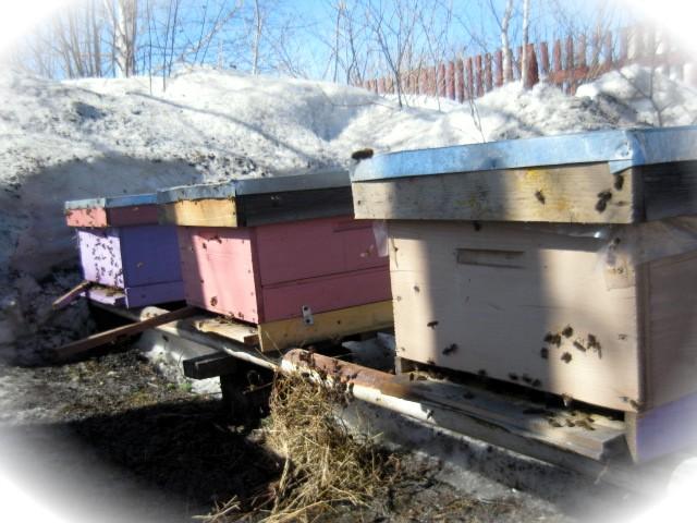 выставление пчёл