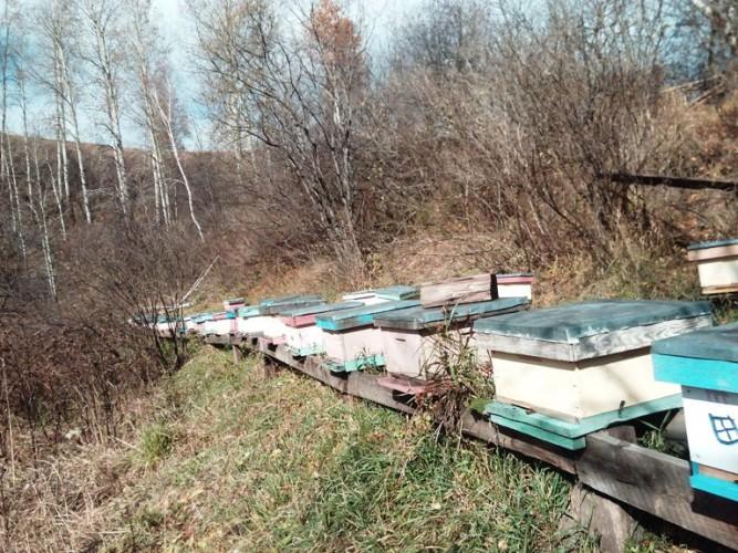 Алтайская пасека осенью