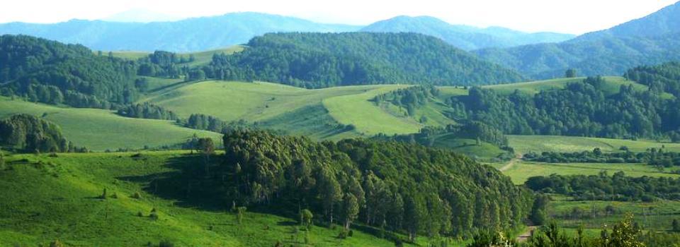 Мёд алтайских гор
