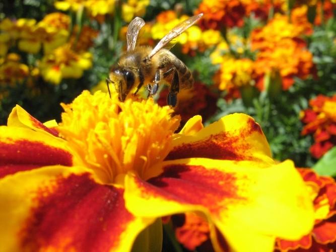 Сон на пчелах 2