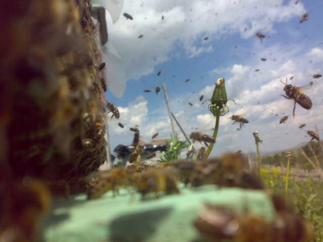 Сон на пчелах 3