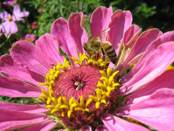 Сон на пчелах