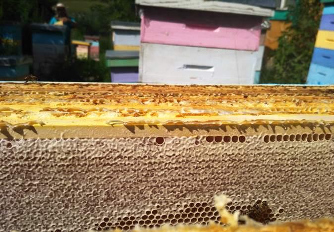 Алтайский мёд отзывы