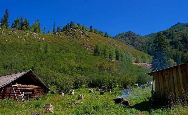 Пасека в горах