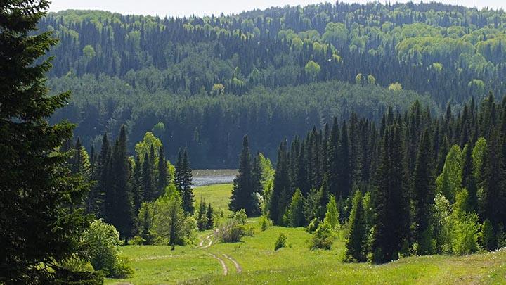 Алтайский мёд, Салаирский кряж